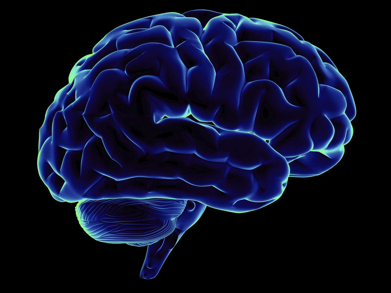 Какими способностями обладает человеческий мозг за 3 месяца до рождения