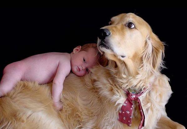 Если в доме живет собака – малыш болеет реже!