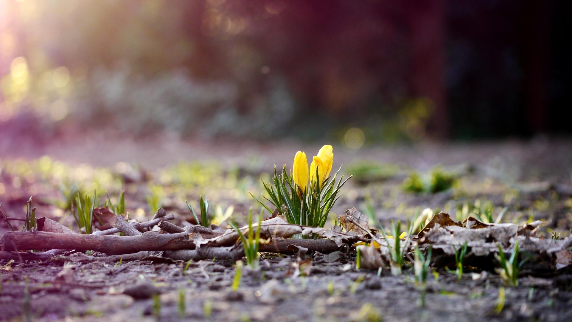 Знакомим малыша с весной!