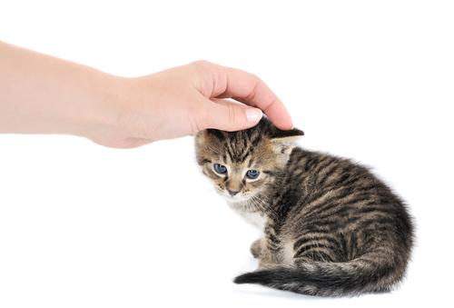 Общение с животными помогает устранить неврозы