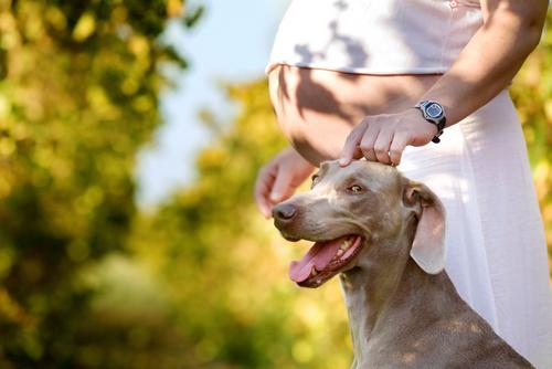 Чем опасны домашние животные во время беременности