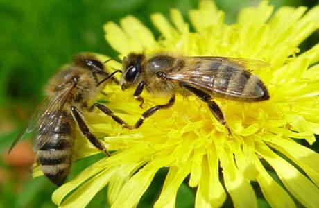 Эти милые пчелки могут доставить много дискомфорта малышу...
