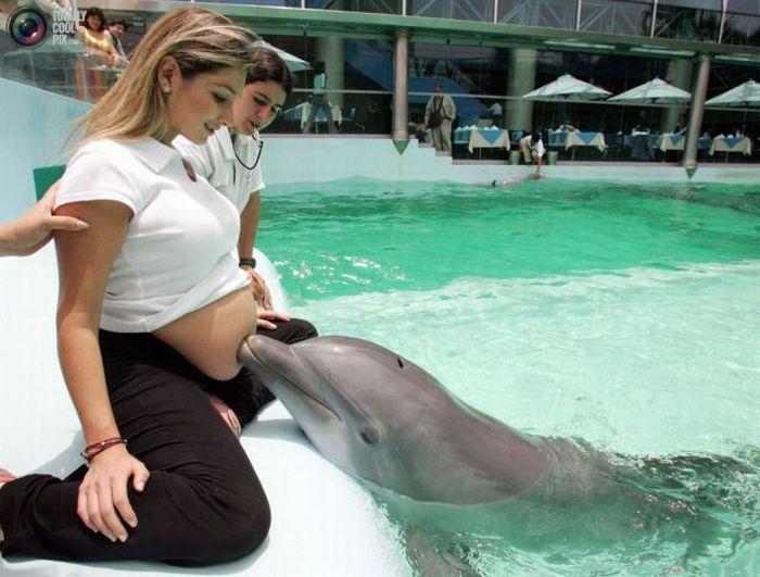 УЗИ при беременности заменят… дельфины