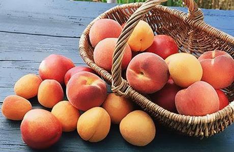 Самый полезный фрукт для беременных и детей – это абрикос