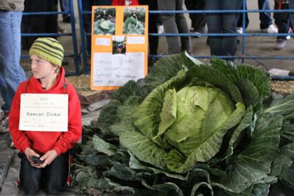 Десятилетний мальчик установил рекорд: он вырастил капусту весом в 42 килограмма