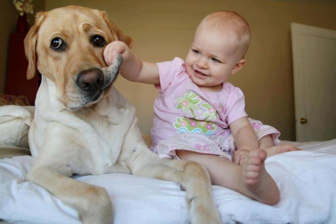 Ребенок и собака: Почему животное в доме – это хорошо