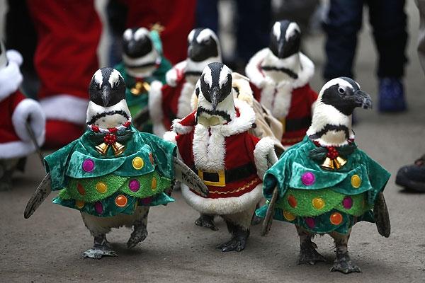 Детей развлекают пингвины в костюмах елки и Санта Клауса