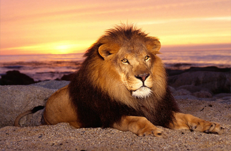 имена для детей рожденных под знаком льва