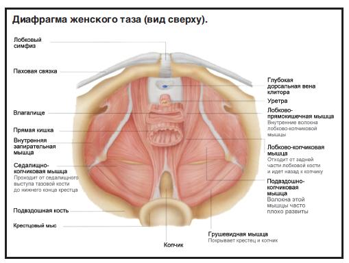 vaginalnie-mishtsi-foto
