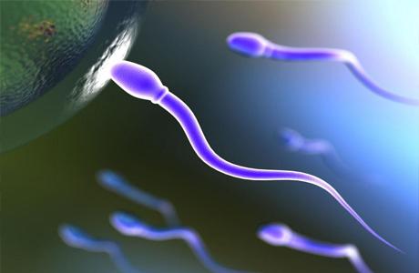 Подвижность сперматозоидов влияет на зачатие