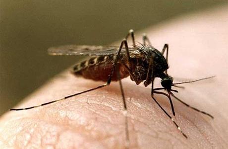 Прилетели комарики на воздушном шарике