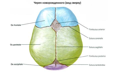 """Родничок или """"мягкое место"""" в верхней части головы младенца"""