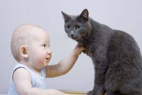 Кошка – символ независимости