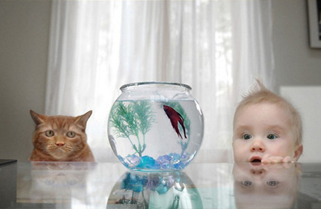 Как влияют животные на развитие ребенка