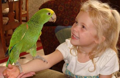 Малыш может заразиться от диких и домашних птиц