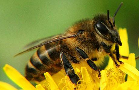 Шок могут вызвать даже укусы насекомых