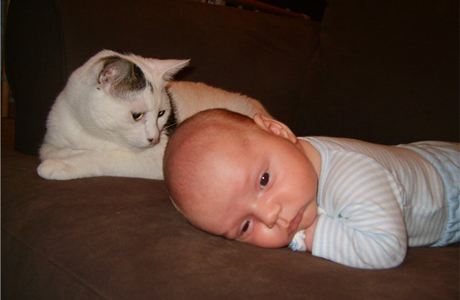 Влияют ли домашние животные на здоровье новорожденного
