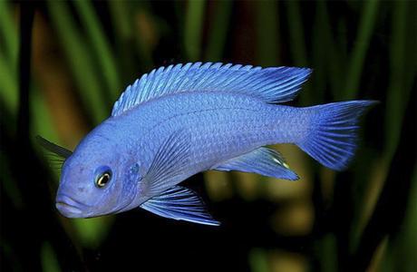 Если ребенок – торпеда, дарить рыбок бесполезно