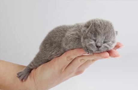 Какое домашнее животное подарить ребенку