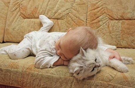 Любовь к котенку