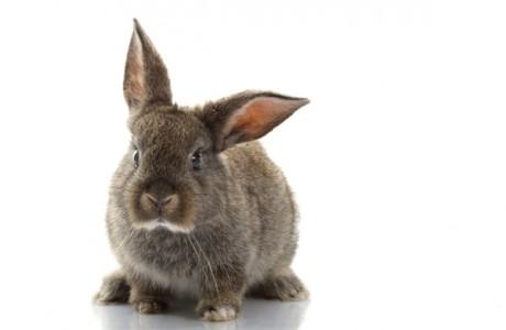 Китайский гороскоп для детей - Кролики