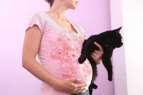 Беременным необходимы кошки