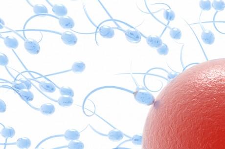 Дамы замораживают свои яйцеклетки