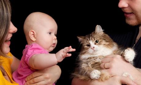 Кошки - переносят токсоплазмоз