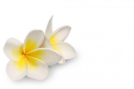Диагностика беременности с помощью цветов