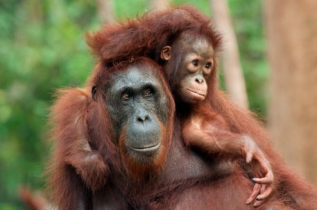 Девочка 5 лет воспитывалась обезьянами