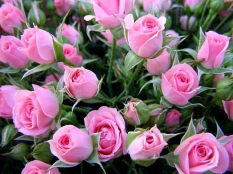 Подарок недели для беременной: шкатулка с розами